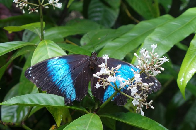 Neotropical Butterfly Park and Colakreek Full-Day Tour