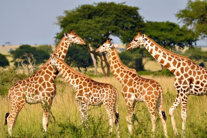 Drakensberg, Mandela Capture Site & Tala P Game Reserve 3 Day Safari from Durban