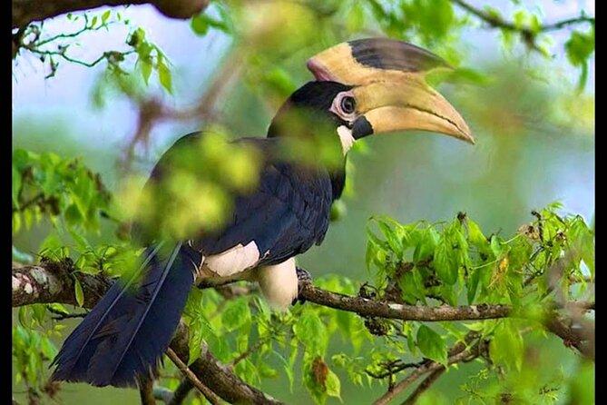 Bundala National Park Safari from Bentota