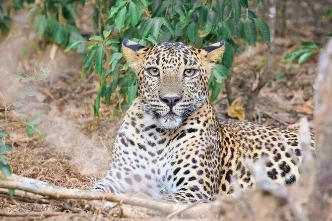 Wasgamuwa National Park Safari from Dambulla