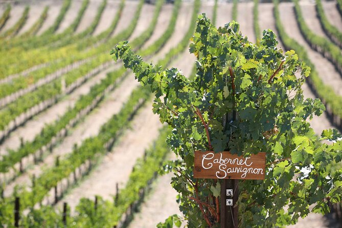 Small Group Winery Tour of Santa Ynez Valley