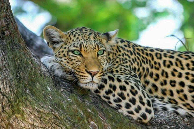 Yala National Park Safari from Dikwella