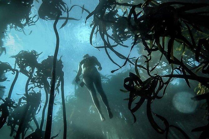 Sustainable Sea Life Adventure w/ Snorkeling add-on