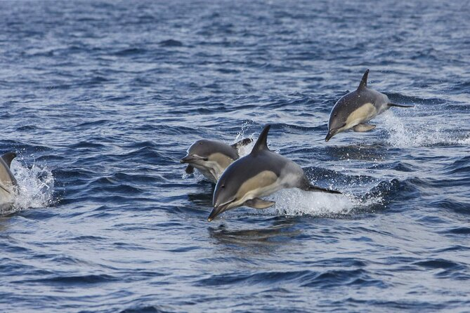 Shannon estuary & dolphin watching luxury river & cliff cruise. Clare. Private.