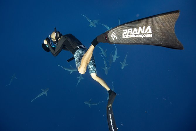 Snorkel with sharks in Hawaii with One Ocean Diving