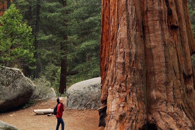 Giant Redwoods Tour Including a 4-Course Winery Lunch