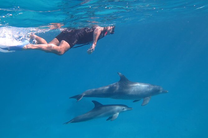 Swimming close to wild dolphins from Hurghada