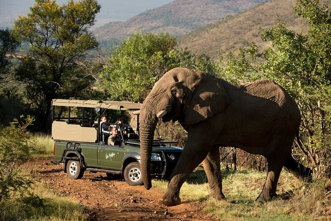 Full-Day Pilanesberg National Park Shared Safari Experience
