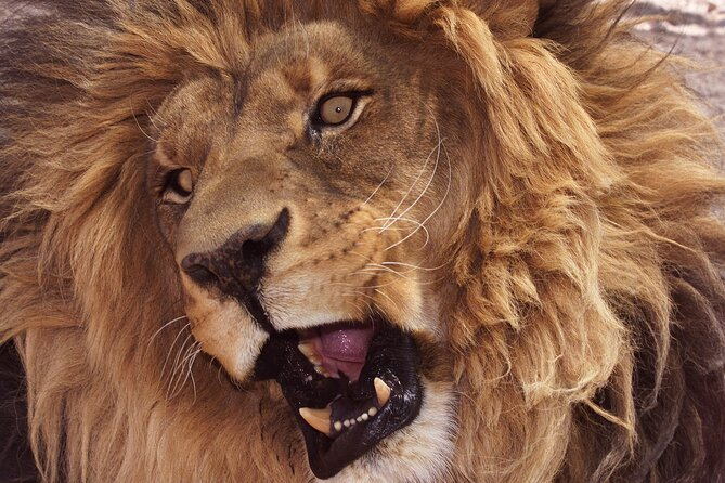 Lion Habitat Ranch Admission Ticket