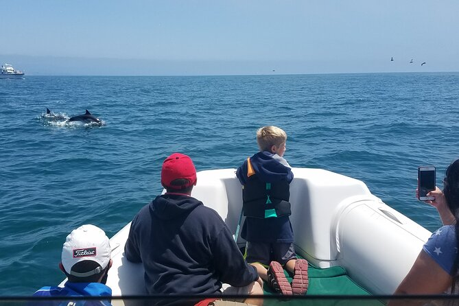 Private Dolphin and Whale Watching Tour in Newport Beach