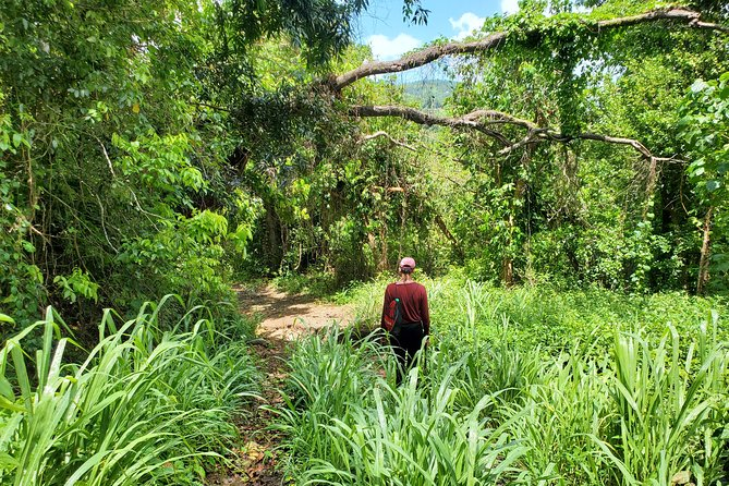 Puerto Rico Tour to El Yunque Rainforest Hiking to Waterfall