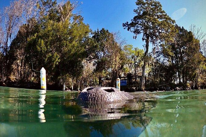 Florida Manatee Adventure, Everglades Style Airboat, Wildlife Park & Transport