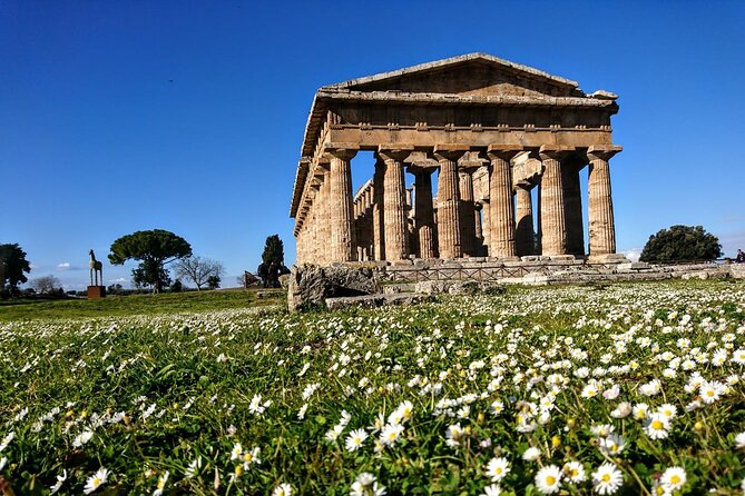 Paestum & Buffalo Farm Full-day Coach Tour from Sorrento