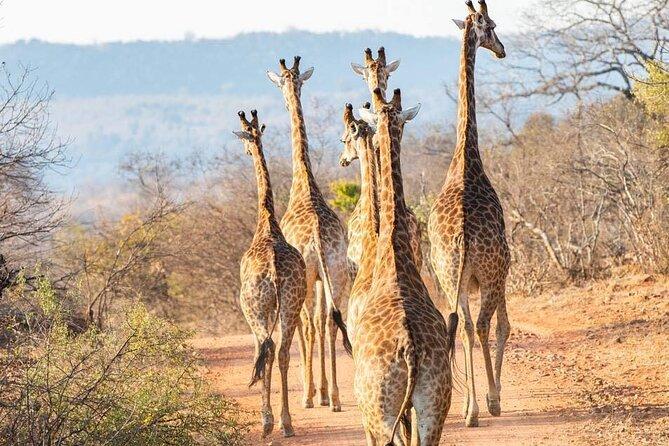 3 Days Kruger Park Safari and Blyde River Canyon