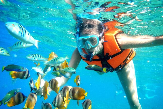 Half-Day Puerto Morelos Snorkeling Experience with Lunch