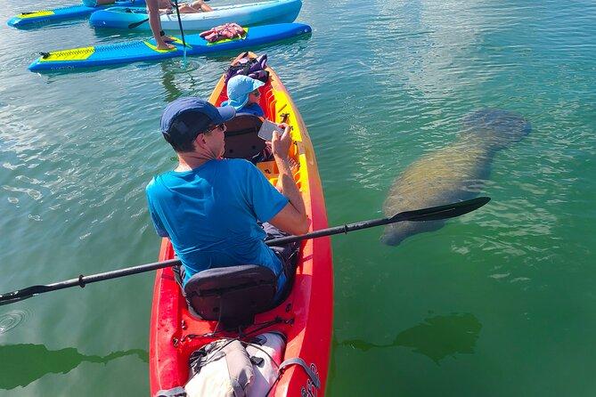 Kayak Tour through Mangrove Tunnels