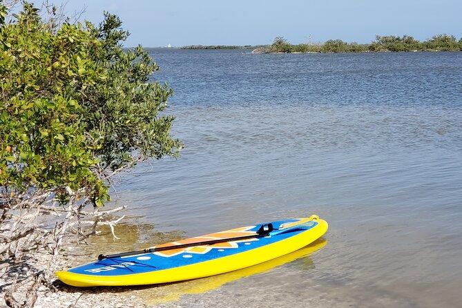 Coastal Wildlife Stand-Up Paddle Adventure