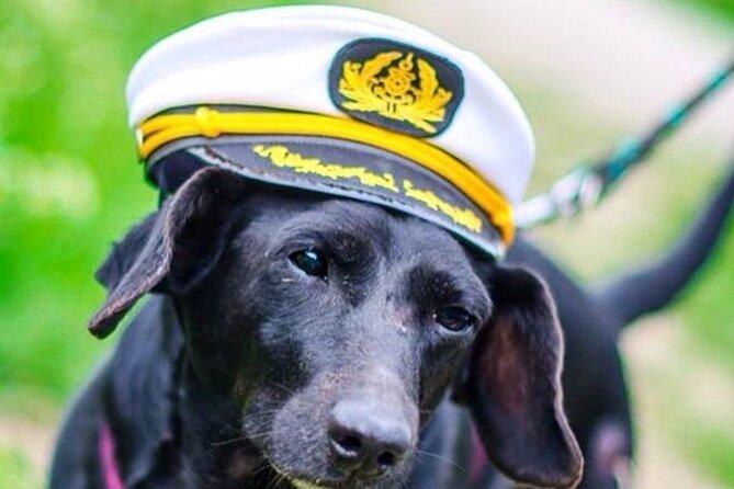 Dog Day of Summer Harbor Cruise in Boston