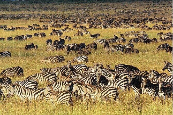 3 Days Serengeti Migration Safari