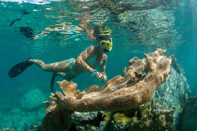 Cruz Bay Picnic Snorkel Sail