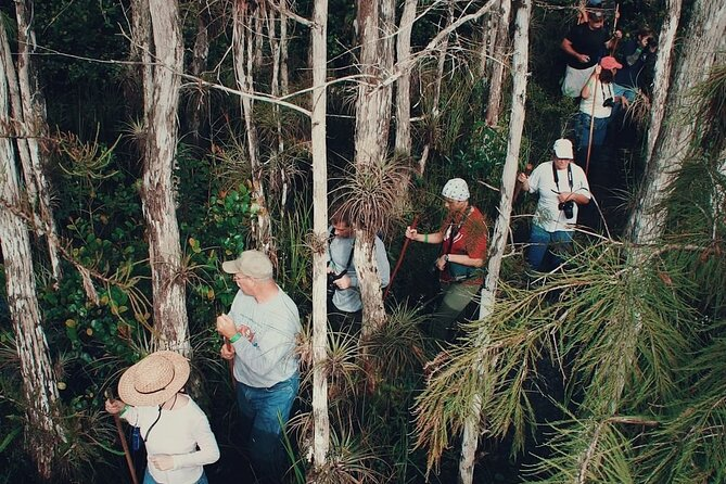 Private Guided Swamp Walk Eco Tour in Ochopee