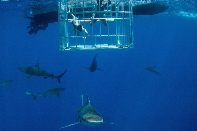 Shark Cage Diving With Real Hawaiians in Hale'iwa