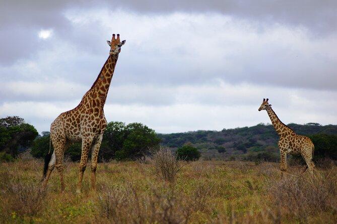 Economic 1-Day Maputo Special Reserve Safari