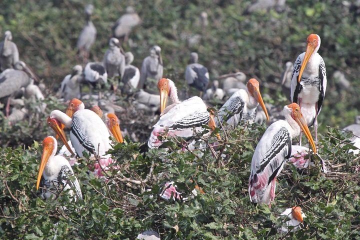 Tripadvisor | Visit to Vedanthangal Bird Sanctuary from Chennai ...