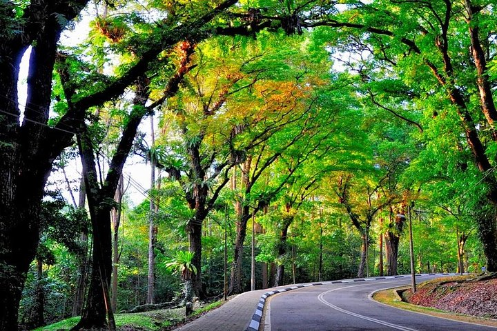 Tripadvisor Nature Trekking From Kuala Lumpur Forest Research Institute Malaysia Frim Pvt Wilayah Persekutuan