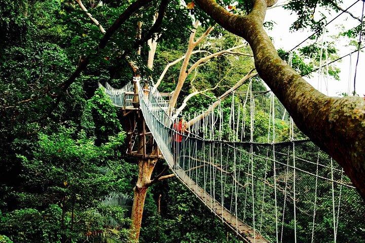Tripadvisor Forest Research Institute Malaysia Frim Nature Trekking Tour Provided By Asni Global Kuala Lumpur Wilayah Persekutuan
