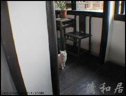 西塘兰若芊蔚客栈猫咪