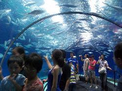 Шанхайский аквариум