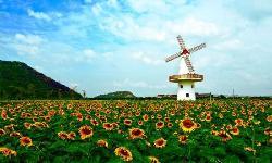 Jocund Farm
