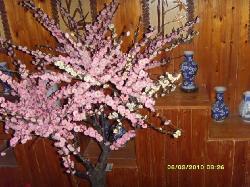 Suzhou Plum Garden