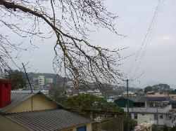 청 차우 섬