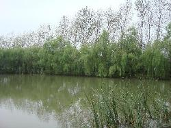 Qin Lake