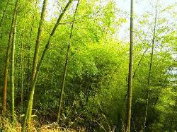 缙云山自然保护区