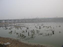 Sanmenxia Swan Viewing Area