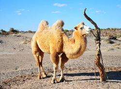 Badan Jaran Desert
