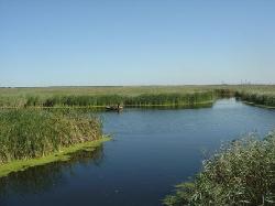 Longfeng Marsh