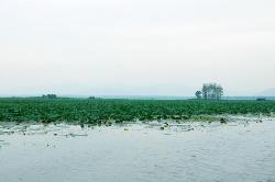 Weishan Lake Wetland Honghe Scenic Area