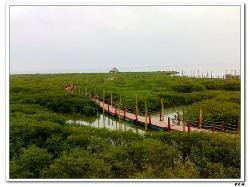 Shankou Mangrove Ecological National Nature Reserve