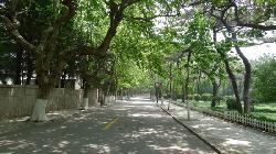 Qingdao No.1 Shanhaiguan Road