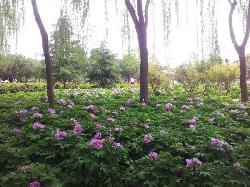 China National Flower Garden