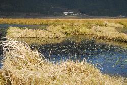 North Sea Marsh