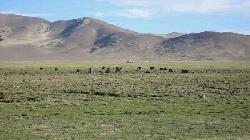 Banda Grassland