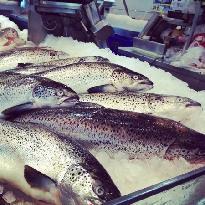 Sushi Bar at Fish Market