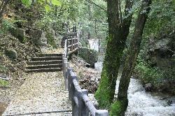 燕子山森林公园