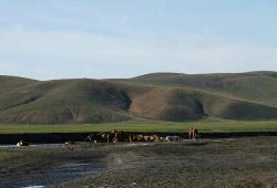Huhnor Grassland