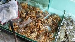 Seafood Dapaidang(Beihai Avenue)